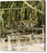 A Female Tiger Rests In The Undergrowth Canvas Print
