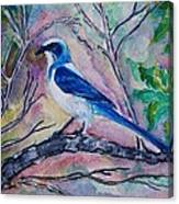 A Fine Feathered Friend Canvas Print
