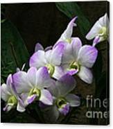 A Flight Of Orchids Canvas Print