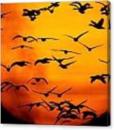A Flock Of Geese Is Silhouetted Canvas Print