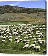 A Flock Of Sheep Canvas Print