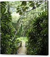 A Flooded Path At Manoa Falls Canvas Print