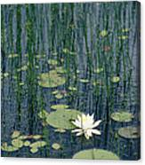 A Flowering Water Lily In Black Canvas Print