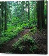 A Forest Green Canvas Print
