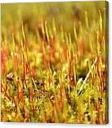 A Forest Of Moss II Canvas Print