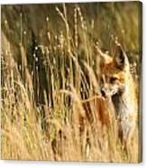 A Fox In A Field Canvas Print