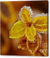 A Frosted Plant Canvas Print