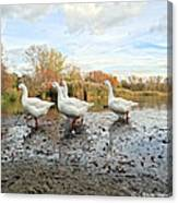 A Gaggle Of Geese II Canvas Print
