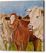 A Gathering Of Cows Canvas Print