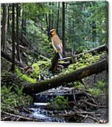 A Giant Cedar Waxwing On Mt Spokane Canvas Print