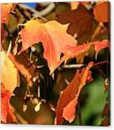 A Glimpse Of Autumn Color Canvas Print