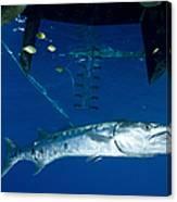 A Great Barracuda Beneath A Boat, Kimbe Canvas Print