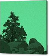 A Green Day For A Pinon Canvas Print