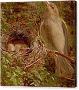 A Greenfinch At Its Nest Canvas Print
