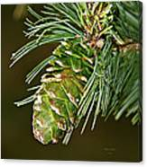 A Growing Pine Cone Canvas Print