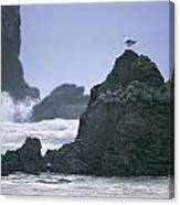 A Gull Sits On A Rock At Cannon Beach Canvas Print