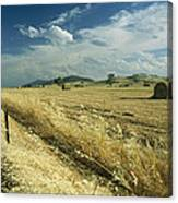 A Hay Field With Bales Sitting Canvas Print