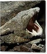 A Hellbender Salamander In Its Rocky Canvas Print