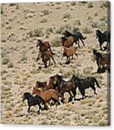 A Herd Of Wild Horses Gallops Canvas Print
