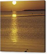 A Heron Wades In The Shallow Water Canvas Print
