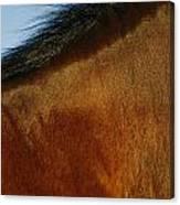 A Horses Neck And Mane, Seen So Close Canvas Print