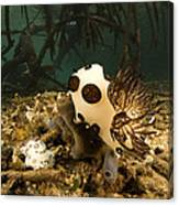 A Large Nudibranch Feeds On A Sponge Canvas Print