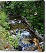 A Lazy Summer Day On Mt Spokane Canvas Print
