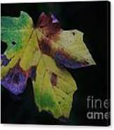 A Leaf Left Black And Blue  Canvas Print
