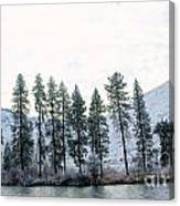 A Line Of Trees In Winter  Canvas Print