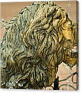 A Lion In Summer Canvas Print