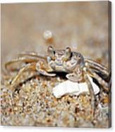 A Little Crabby Canvas Print