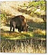A Lone Bison In Yellowstone 9467 Canvas Print