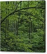 A Lush Green Eastern Woodland View.  An Canvas Print