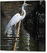 A Majestic Bird Canvas Print