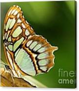 A Malachite Butterfly Canvas Print