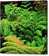 A Mass Of Ferns Canvas Print