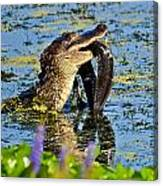 A Meal Fit For A Gator Canvas Print