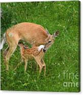A Mother's Love - Doe And Fawn Canvas Print