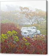 A Natural Garden At Dolly Sods Wilderness Area Canvas Print