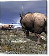A Pair Of Male Elasmotherium Confront Canvas Print