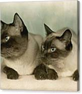 A Pair Of Siamese Cats Canvas Print