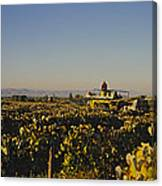 A Panoramic View Of A Vineyard Canvas Print