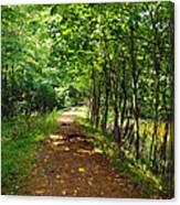A Path Around The Pond Canvas Print