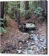 A Peaceful Redwood Creek On Mt Tamalpais Canvas Print