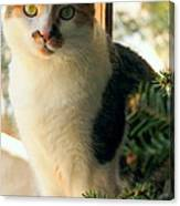 A Pet And Christmas Canvas Print
