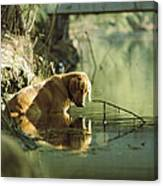 A Pet Dog Sits In The Shallow Water Canvas Print