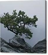 A Pine Tree Clings To A Rocky Ridge Canvas Print