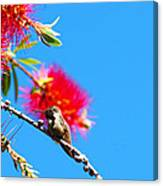 A Place To Perch Canvas Print