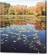 A Pond Of Reflective Beauty Canvas Print