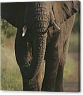 A Portrait Of An African Elephant Canvas Print